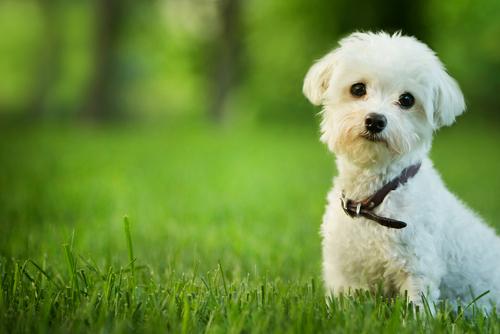 pets_shutterstock_137913404